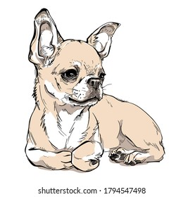 Cute chihuahua sketch. Vector illustration