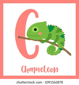 Cute children ABC animal zoo alphabet C letter flashcard of Chameleon climbing on branch for kids learning English vocabulary. Vector illustration.