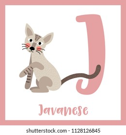 Cute children ABC animal zoo alphabet J letter flashcard of Sitting Javanese cat for kids learning English vocabulary. Vector illustration.
