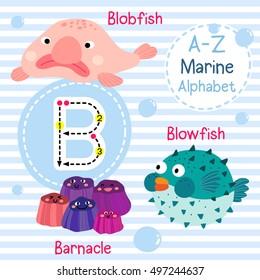 Cute children sea alphabet flashcard of funny marine animal cartoon B letter tracing for kids learning English vocabulary.