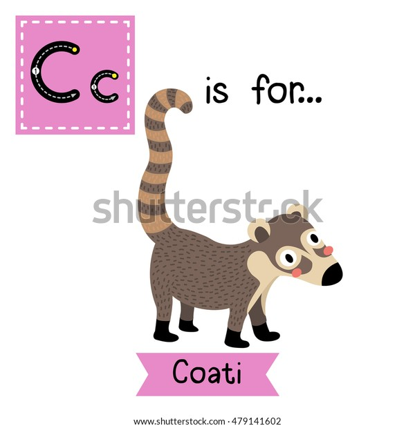 Cute children zoo alphabet C letter tracing of standing Coati for kids learning English vocabulary.