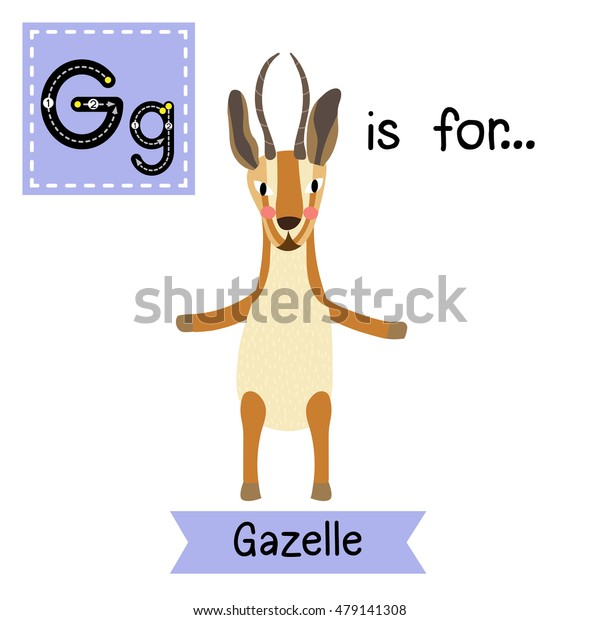 Cute children zoo alphabet G letter tracing of Gazelle standing on two legs for kids learning English vocabulary.