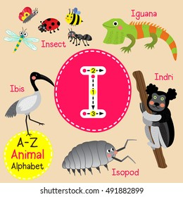 Cute children zoo alphabet I letter tracing of funny animal cartoon for kids learning English vocabulary.
