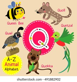 Cute children zoo alphabet Q letter tracing of funny animal cartoon for kids learning English vocabulary.