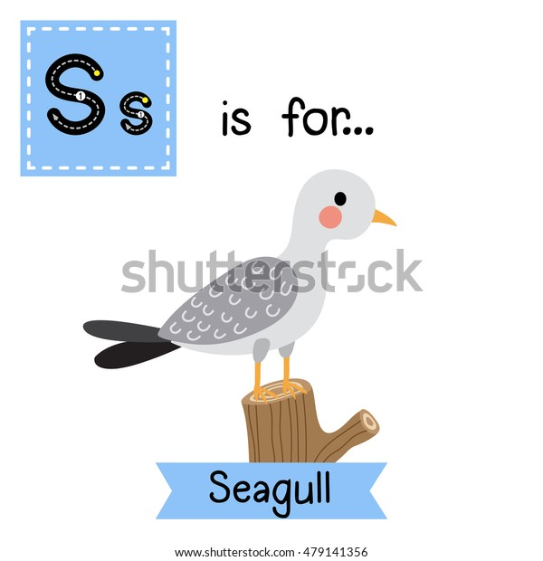 Cute children zoo alphabet S letter tracing of Seagull bird perching on branch for kids learning English vocabulary.