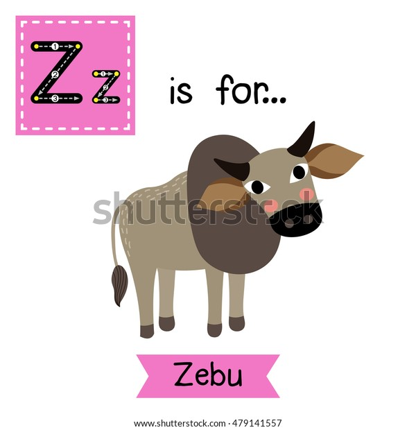 Cute children zoo alphabet Z letter tracing of Zebu for kids learning English vocabulary.