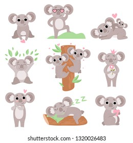 Cute Coala Bears Set, Funny Animal Cartoon Characters in Various Poses and Situations Vector Illustration