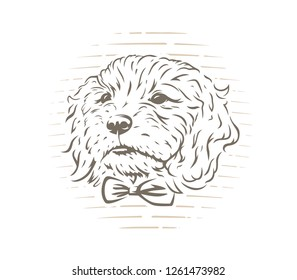 Cute cockapoo dog puppy with bow-tie vector illustration on white background.
