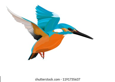 Cute colorful bird Kingfisher. Realistic vector bird. White background.