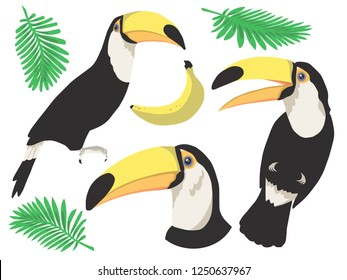 Cute colorful cartoon tropical Toco Toucan bird with pam leaves graphic vector illustration art set