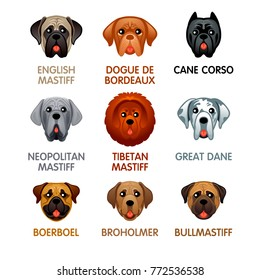 Cute colorful mastiff dog head icons