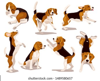 Cute cool beagle puppy set. Collection of flat plaing dog in various poses and actions. Vector illustration of domestic pet behavior
