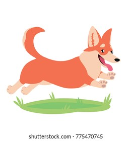 Cute corgi dog on grass. Colorful vector illustration of Welsh Corgi Pembroke in flat cartoon style on white background. Element for your design, avatar, print. Funny pet running, jumping and smiling.