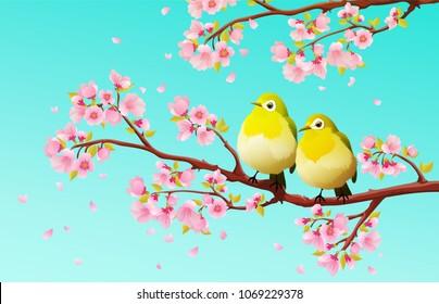Cute couple of green japanese white-eye birds on sakura tree with cherry blossom and blue sky. Vector illustration.