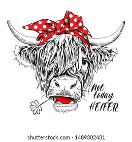 Cute cow (Hairy Coo) in a red polka dot bow headband and witn chamomile flower. Not today heifer - lettering quote. Humor card, t-shirt composition, hand drawn style print. Vector illustration.