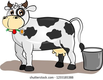 Cute cow with lovely flower in mouth staying near bucket of milk. Isolated on white background.