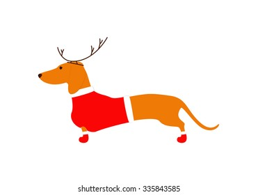 Cute dachshund brown in reindeer horns and red Christmas suit isolated on white background. Flat style vector illustration