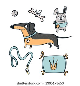 Cute dachshund dog isolated with bone, toys and leash. Vector illustration set