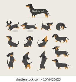 cute Dachshund various variations poses character vector illustration flat design