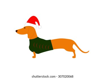 Cute dachshund wearing Christmas suit, green jersey decorated with red stripes and red hat