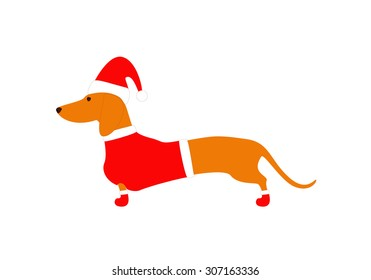 Cute dachshund wearing Christmas suit, red coat, hat and boots isolated on white background
