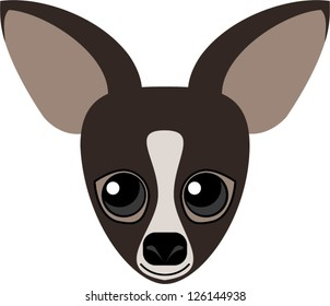 Cute dark chocolate brown chihuahua dog with big googly eyes and huge ears.