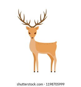 Cute deer isolated on white background, illustration.