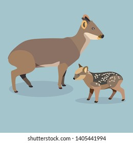 Cute deer vector illustration (Pudu deer)