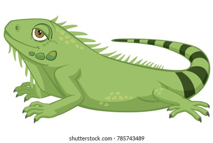 Cute Detailed Pet Iguana Cartoon Style Vector Illustration Isolated on White