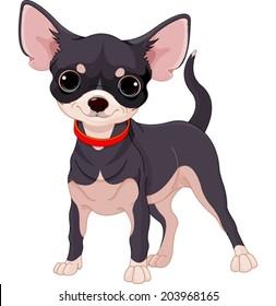 Cute dog of breed Chihuahua