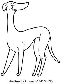 Cute Dog breed Greyhound isolated on the white background