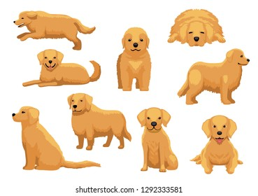 Cute Dog Golden Retriever Nine Poses Cartoon Vector Illustration