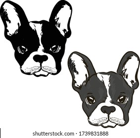 Cute dog Muzzle of frenchie buldog with bunny ears in black & white colors illustration.