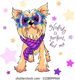 Cute dog pale cream Yorkshire terrier breed in trendy star rainbow glasses and striped scarf
