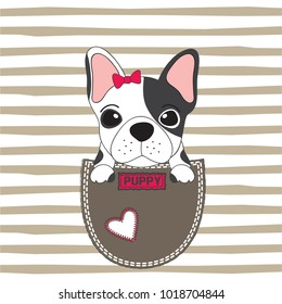cute dog in the pocket, french bulldog puppy dog vector illustration