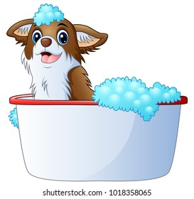 Cute dog taking a bath on a white background