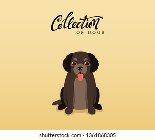 Cute dogs labrador and retriever. Flat animal cartoon character.