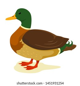 Cute duck in cartoon style. Vector illustration on white background. Duck