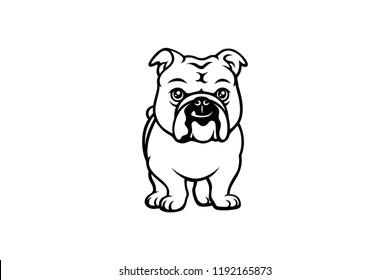 Cute English Bulldog