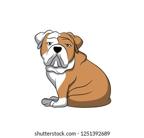 Cute English Bulldog Cartoon Dog. Vector illustration of purebred english bulldog dog.