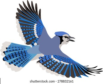 cute flying blue jay with beautiful wings