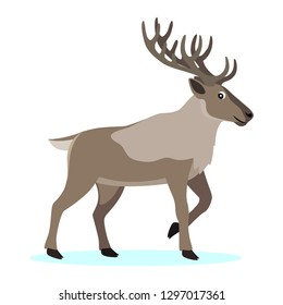 Cute forest polar animal, cartoon caribou reindeer with long horns, vector illustration isolated on white background