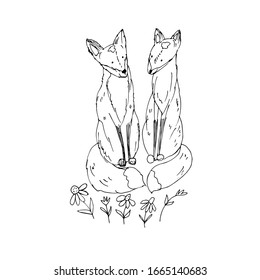 Cute foxes. Vector illustration. Line drawing.