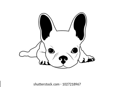 Cute French Bulldog on His Bed in Black & White