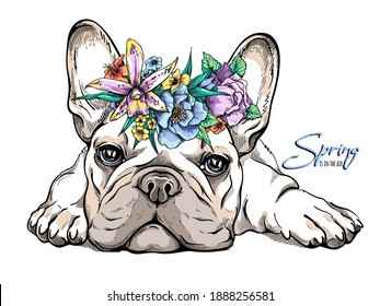 Cute french bulldog puppy in a flower wreath. Spring portrait of a dog. Stylish image for printing on any surface