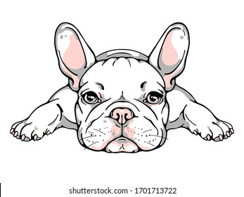 Cute french bulldog puppy. Vector illustration