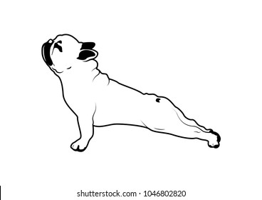 Cute French Bulldog Yoga Exercise in Black & White