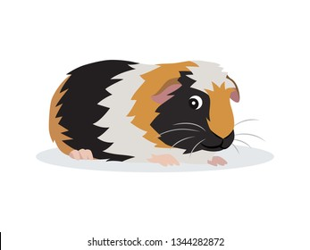 Cute friendly guinea pig icon isolated on white background, small fluffy rodent pet, vector illustration in flat style