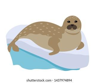 Cute funny cartoon seal. Harbor seal or true seal. vector.