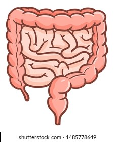 Cute and funny colon or intestine in cartoon style